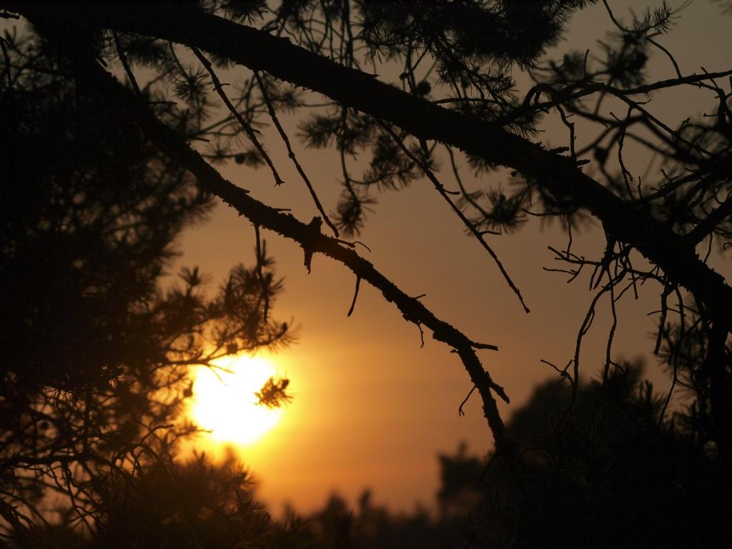 Hemelse avondwandeling op landgoed Bruggelen
