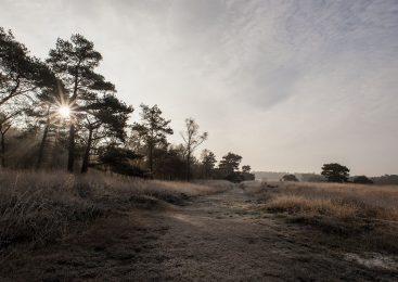 Snertwandeling over de Loenermark