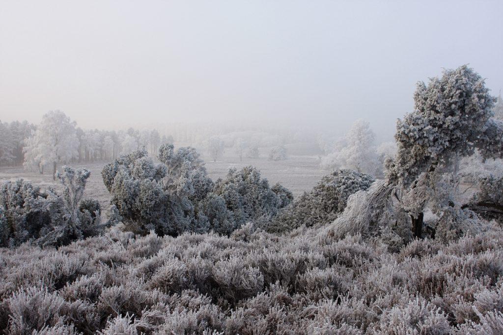 Wintersferen op de Loenermark