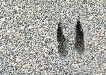 Diersporenzoektocht op landgoed Bruggelen