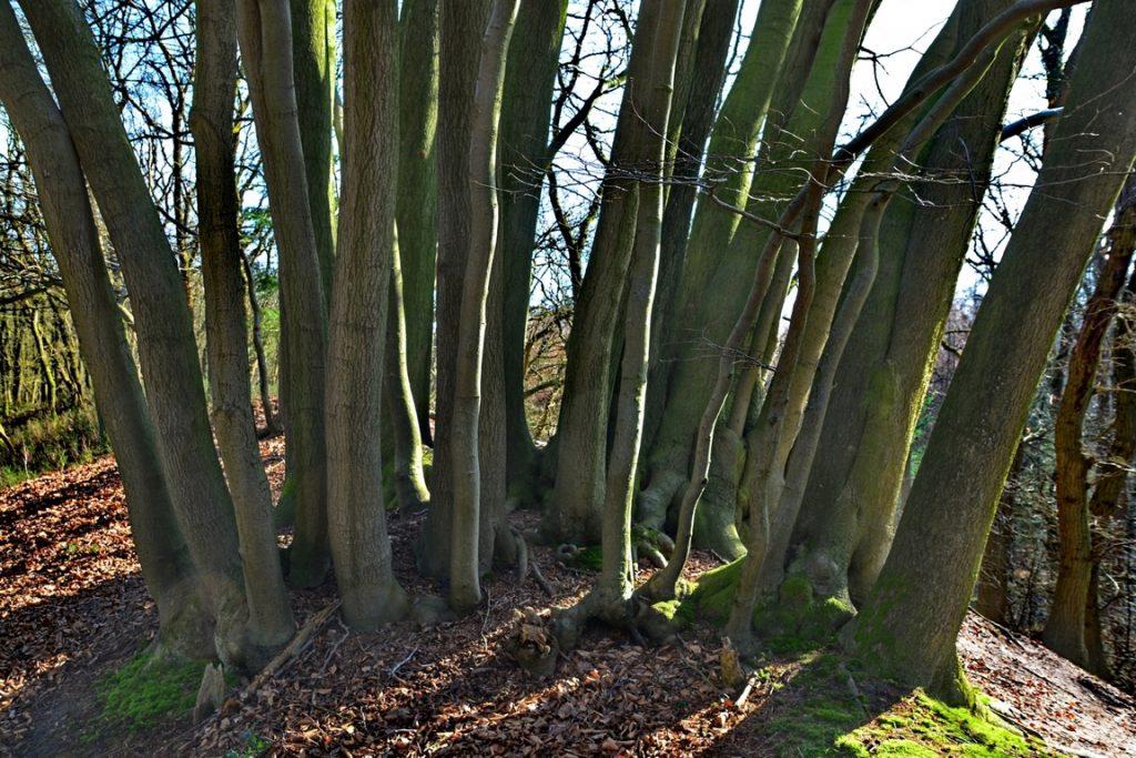 Historische wandeling natuurgebied de Zandhegge