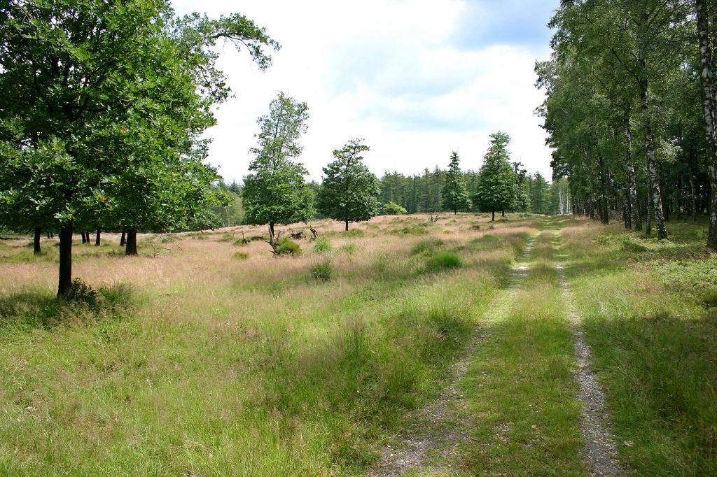 Lange wandeling over de Loenermark