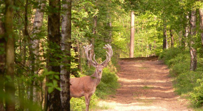 Wandeling natuur en cultuurhistorie door het Orderbos
