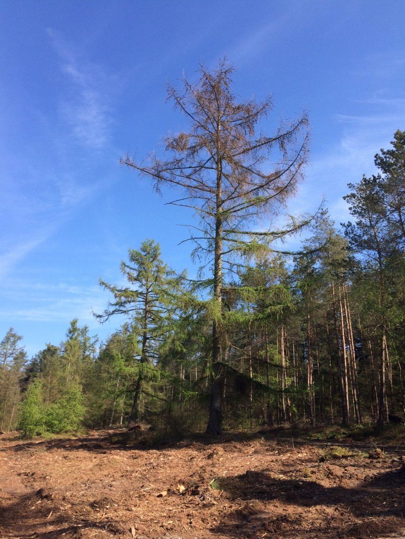 Lariksbastkever tast bomen Loenermark en Bruggelen aan