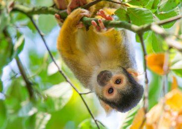 Apenheul pakt uit met seizoenkaartactie voor Apeldoorners