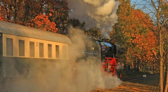 Bonte herfststoom op de Veluwe