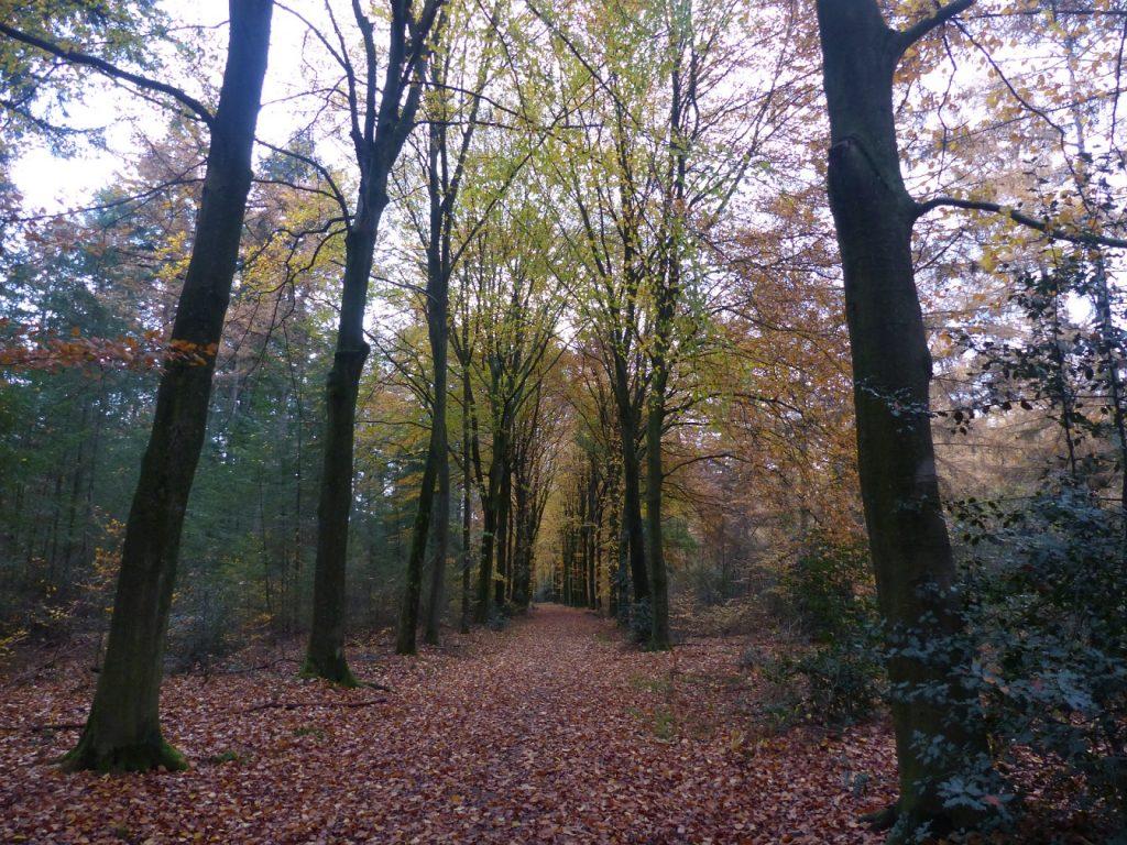 Herfstwandeling in bosgebied de Zandhegge