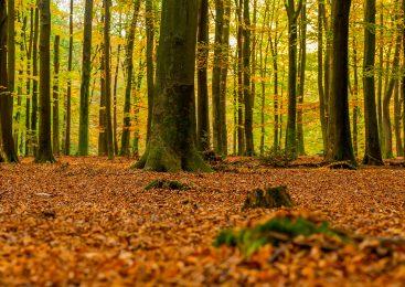 Herfst of de Loenermark