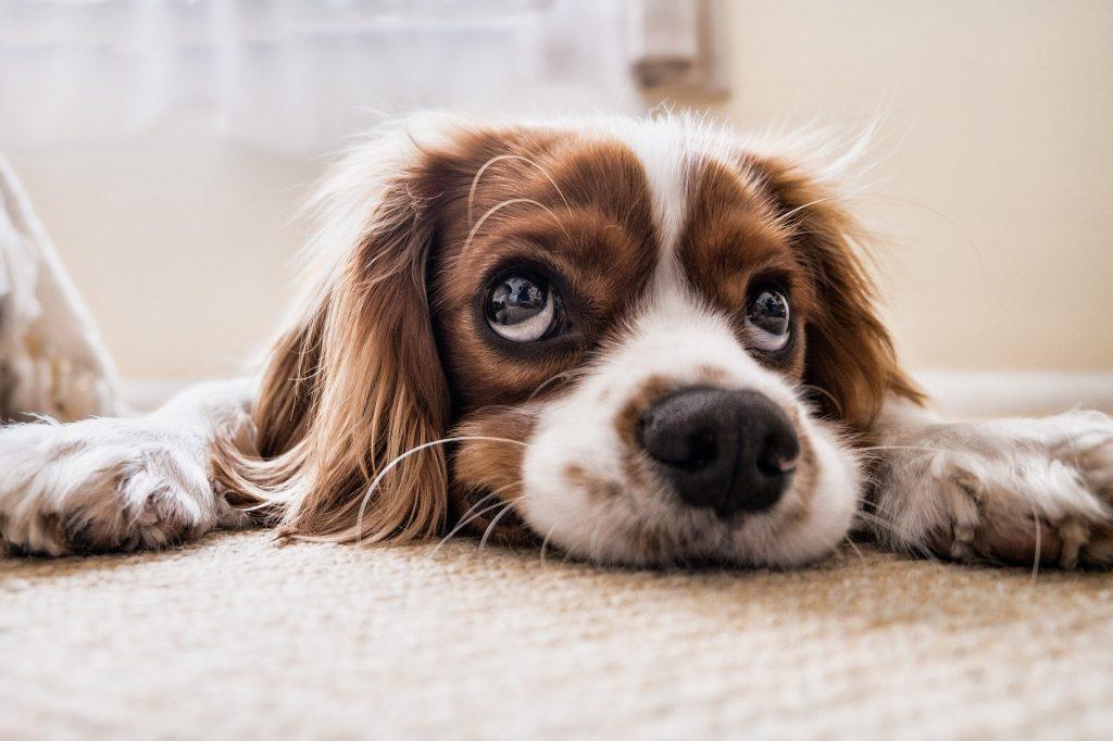 Controleurs hondenbelasting gaan weer op pad