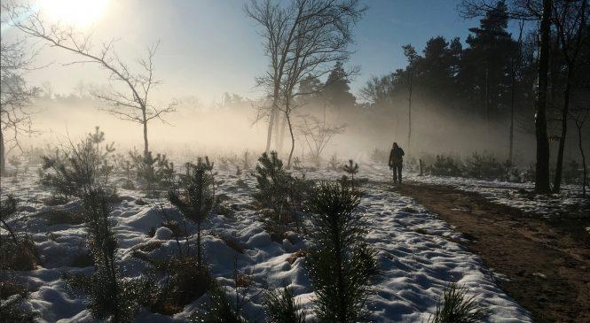 Naaldbomenwandeling Loenermark