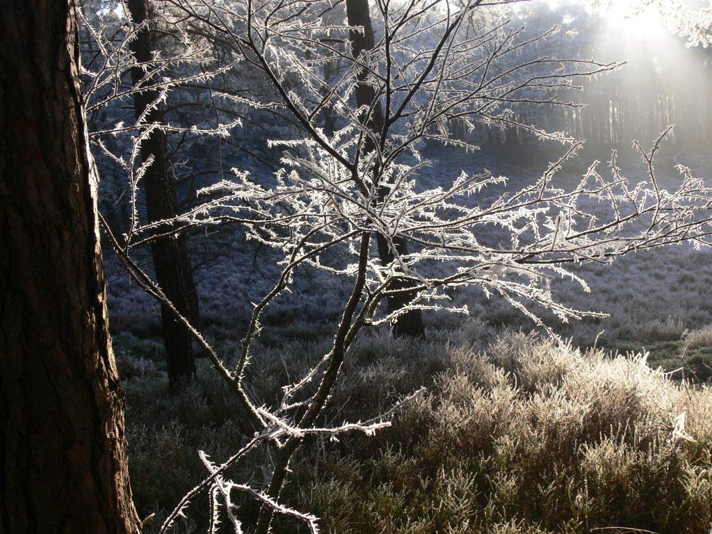 Winterwandeling Zandhegge