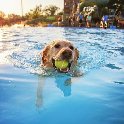 Boschbad sluit seizoen af met hondenzwemmen