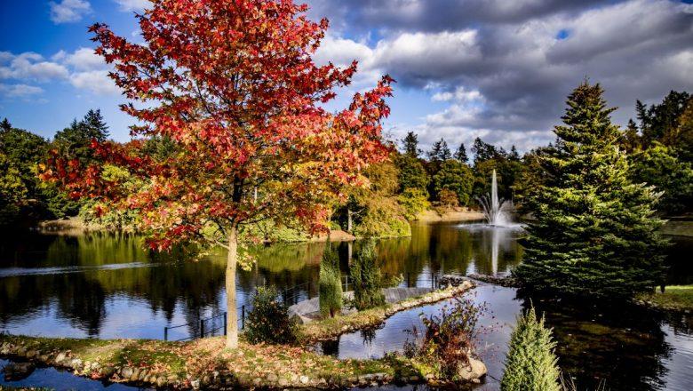 Groot onderhoud vijver park Berg en Bos