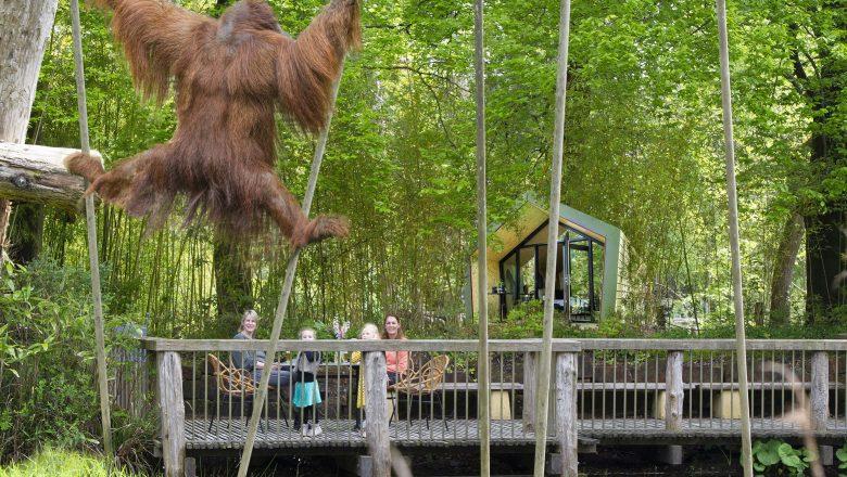Apenheul viert 50 jaar bestaan met slapen bij de apen!