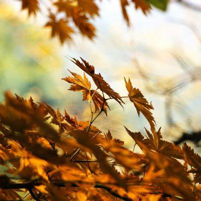 Roots herfstprogramma in de natuur op de Bosweide